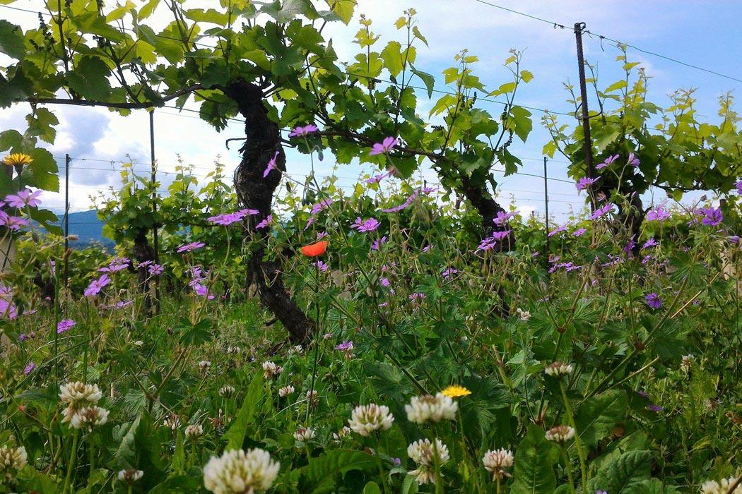 terroir vins de savoie apremont